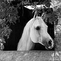 White Beauty - Series #5 by Barbara Zahno