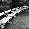 White Benches-  By Linda Wood Woods by Linda Woods