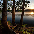 White Birch And Kennebec River At Sunset, So.gardiner Me #8360-63 by John Bald