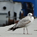White Bird Port Burgas by Anton Kostadinov