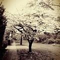 White Bloomers by Eddie G
