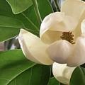 White Bouquet by Ze DaLuz