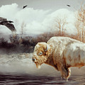 White Buffalo And Raven by KaFra Art