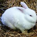 White Bunny by Cynthia Guinn