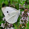 White Butterfly At The Good Earth Market by Kim Bemis