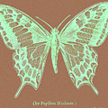 White Butterfly Swallow Tail Le Papillon Machaon by R Muirhead Art