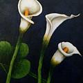 White Calla Lilies by Agusta Gudrun  Olafsdottir