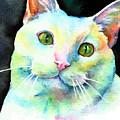 White Cat by Christy Freeman Stark
