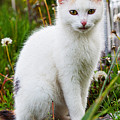 White Cat Sitting by Queso Espinosa