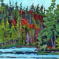 White Cedar Shore by Phil Chadwick
