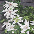 White Clematis by Elizabeth Ellis