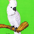 White Cockatoo by Jay Kinney