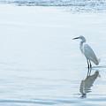 White Crane by Hannes Cmarits