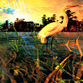 White Cranes by Jolie Lisa