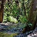 White Creek by Stacie Gary