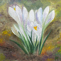 White Crocus by FT McKinstry