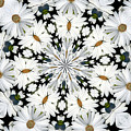 White Daisies Mandala Abstract by Rose Santuci-Sofranko