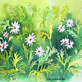 White Daisys by Kathryn Duncan