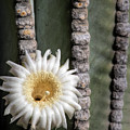 White Desert Jewel by Elisabeth Lucas