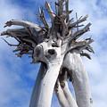 White Desert Tree by Philip Openshaw