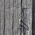 White Door Handle by Garry Gay