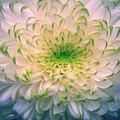 White Dream by Camelia C