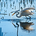 White Egret At Horicon Marsh Wisconsin by Steve Gadomski