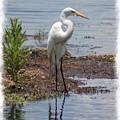 White Egret by Donna Bentley