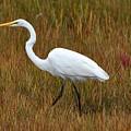 White Egret by Jo-Ann  Matthews