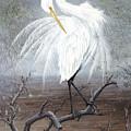 White Egret by Kevin Brant