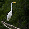 White Egret-signed-#0493 by J L Woody Wooden