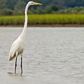 White Egret by William Haney