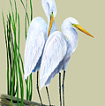 White Egrets And White Lillies by Kevin Brant