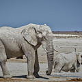 White Elephants by Ernie Echols
