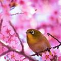 White Eye Bird by masahiro Makino
