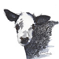White Faced Hereferd Calf Baby Cow by Kathleen McElwaine