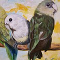 Chloe The    Flying Lamb Productions           White Faced Lovebirds by Sigrid Tune