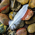 White Feather On River Stones by Garry Gay
