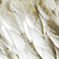 White Feathers With Gold by Mindy Sommers