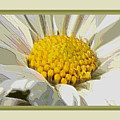 White Flower Abstract With Border by Carol Groenen