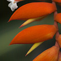 White Flower And Orange by Karen Ulvestad