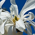 White Flower Blue Skies by Edward Myers