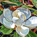 White Flower by Don and Sheryl Cooper