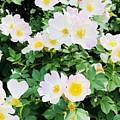 White Flower by Ronalyn Ferrer