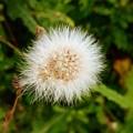 White Flower by Sandeep Kumar Dogra