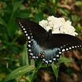 White Flowered Butterfly by Mary Halpin