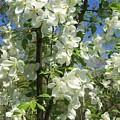 White Flowers 2 by Sabina Trzebna