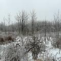 White Forest In Freezing Rain by Dmytro Toptygin