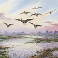 White-fronted Geese Alighting by Carl Donner