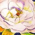 White Gardenia by Anne Sands
